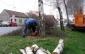 breze u Nazorovoj