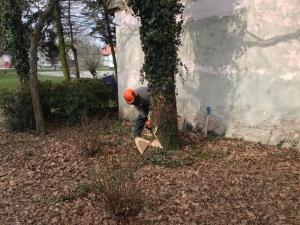 uklanjanje stabla uz kucu