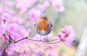 proljece ptica